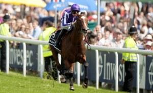 20120602_St_Nicholas_Abbey_horse