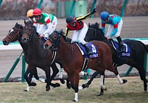 「貴婦人」等六匹馬退役後,牠們將會有新的旅程…… Source: Jiji Press
