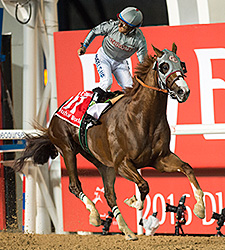 20160326_California_Chrome