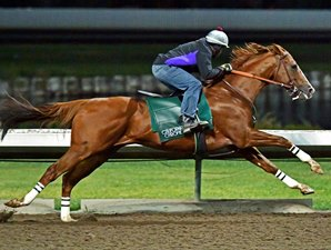 20161119_california_chrome