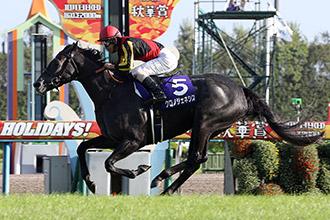 共十二匹日本賽駒獲邀參加國際賽,已有馬匹願意出賽。