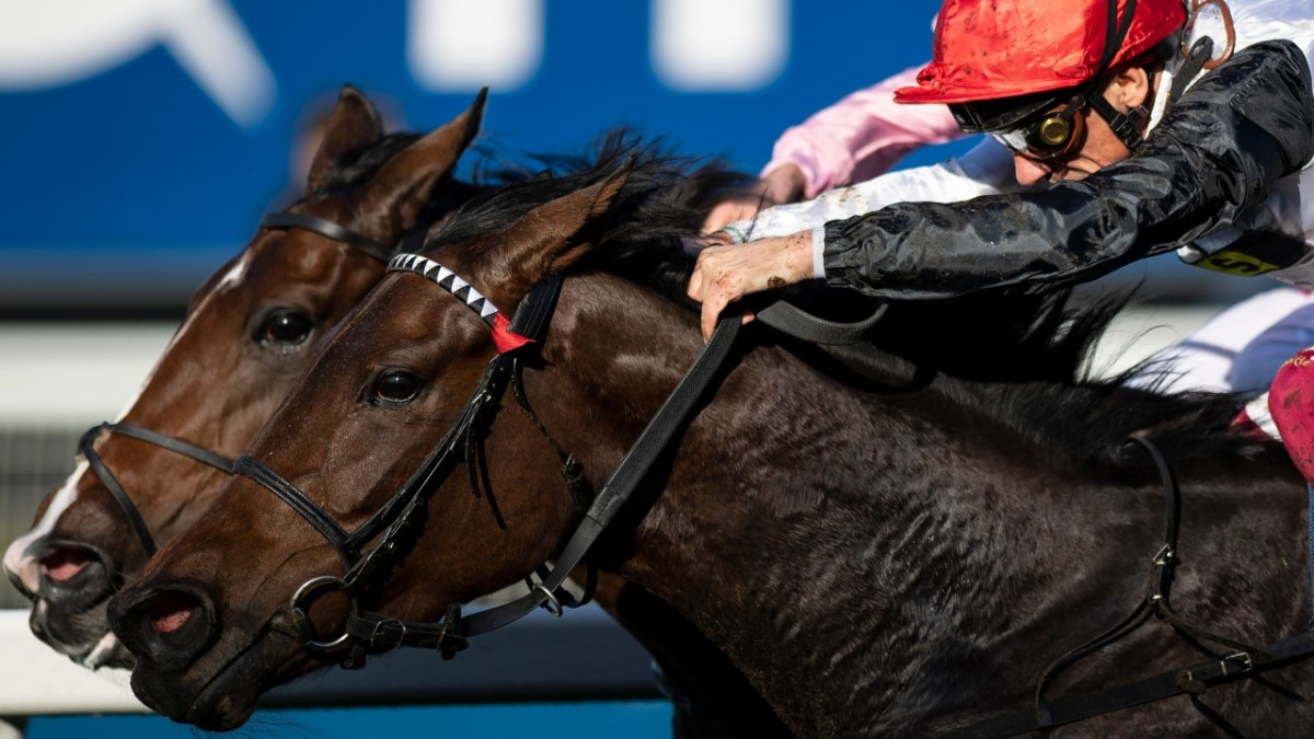 [Flameracing]英國冠軍雌馬錦標,星捕手驚險下保持連勝