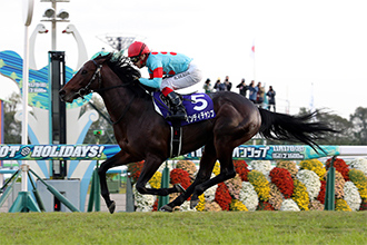 三日本馬直接及間接放棄參與香港冠軍賽馬日