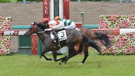每日賽馬晚報(2020年6月13日),九州熊本產馬新馬賽照贏,南非籍紐西蘭騎師再次終身停賽
