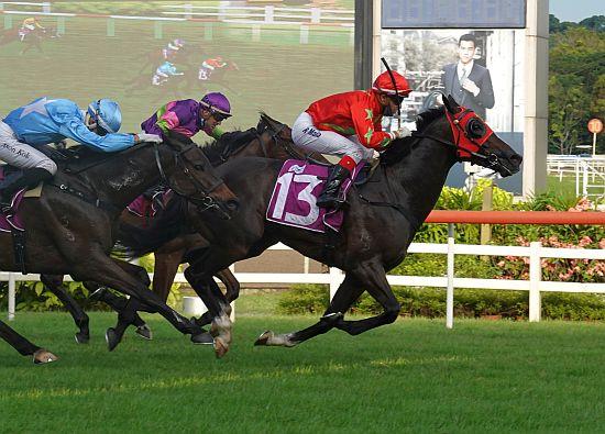 每日賽馬晚報(2021年1月21日),新加坡出走潮持續,馬雅來港策騎,高知競馬再破投注額紀錄