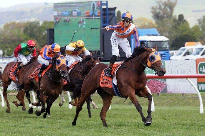 每日賽馬晚報(2020年10月17日),英國冠軍賽馬日場外特別版,聖雅之路退出墨爾本盃競逐,旋律美人紐西蘭再下一城