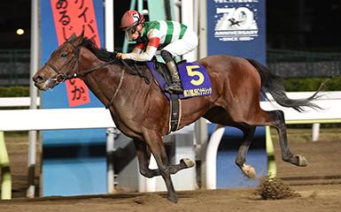 日本育馬場盃,地方馬Saburo Junior爆冷贏短途大賽,Chrysoberyl繼續保持不敗