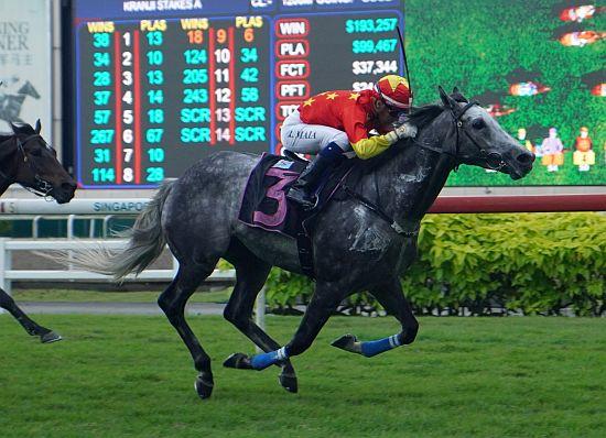 每日賽馬晚報(2021年1月23日),高多芬忠實名駒Slickly離世,馬雅星州送行戰有馬贏