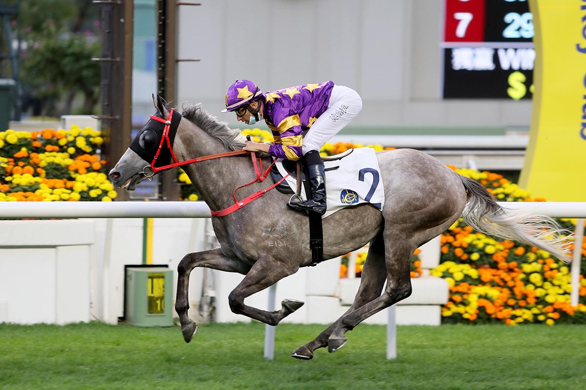 香港四歲馬系列賽新風雲,銀馳能不能一鼓作氣攻佔打吡?