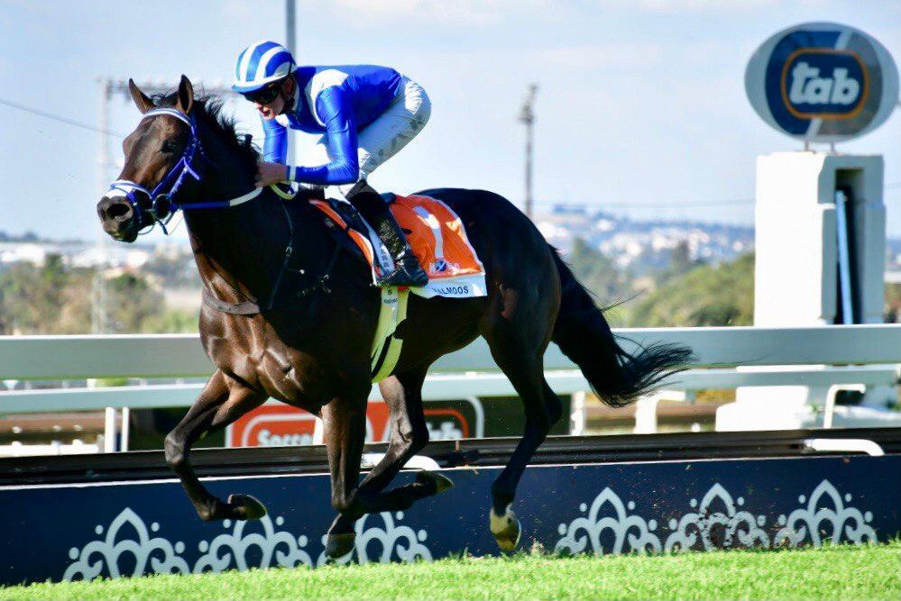 南非三冠及雌馬三冠週六同日見證