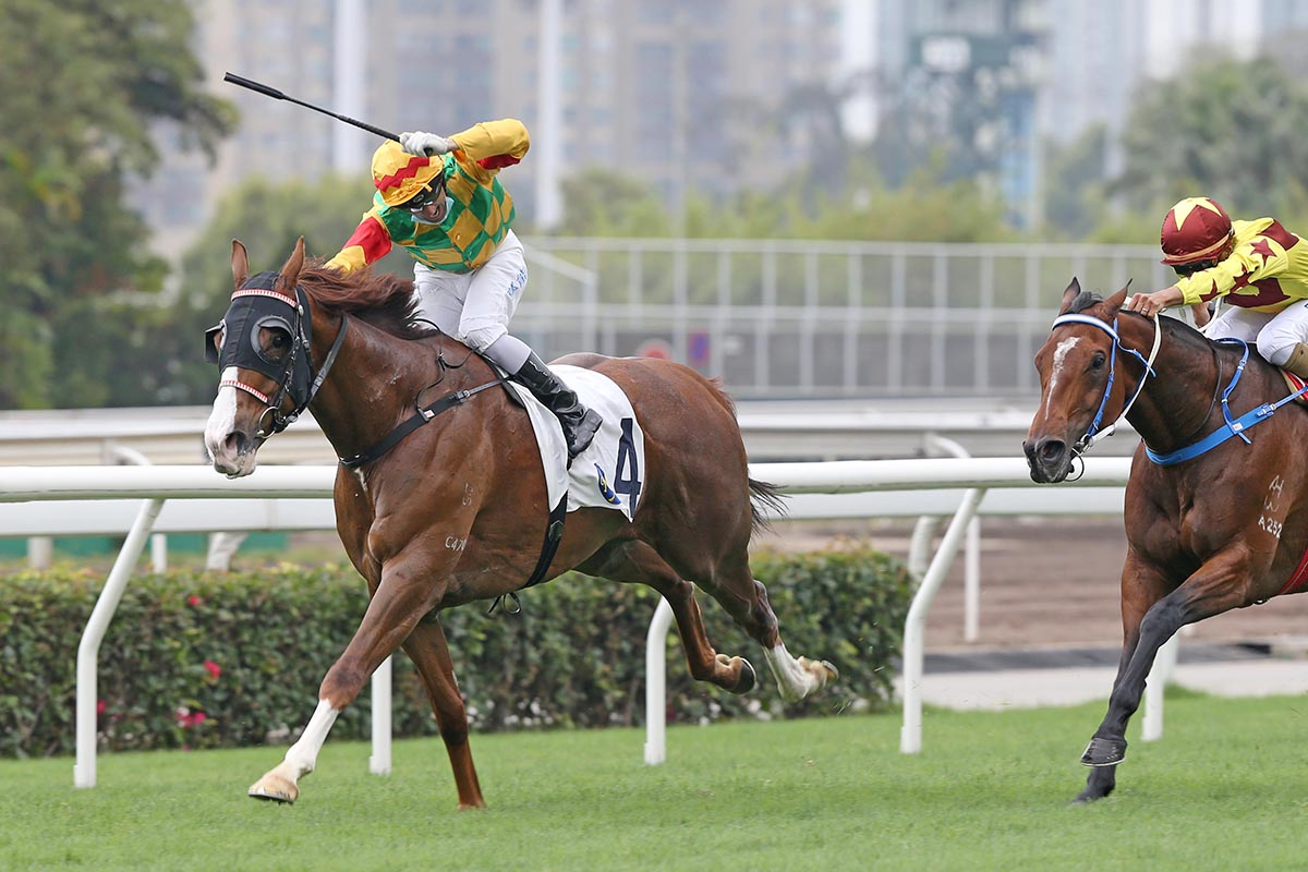 主席錦標,高大威猛慢放贏馬