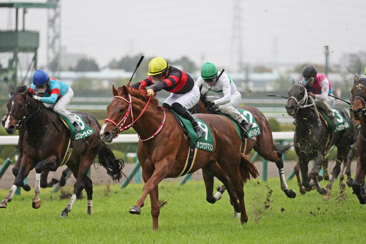 三歲馬由一哩出發,真堅尼路線NHK一哩盃(賠率及跑法更新)