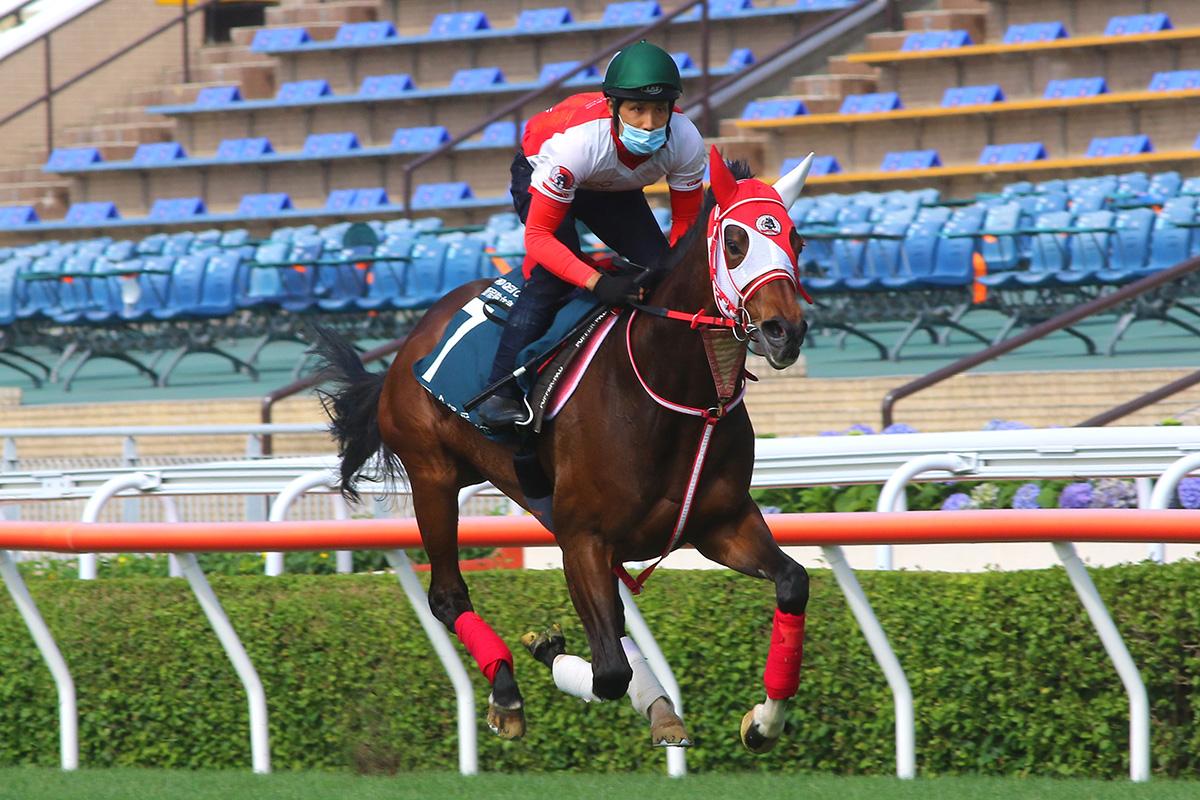 冠軍一哩賽及女皇盃前瞻合輯,金鎗六十及日本馬是否必勝?