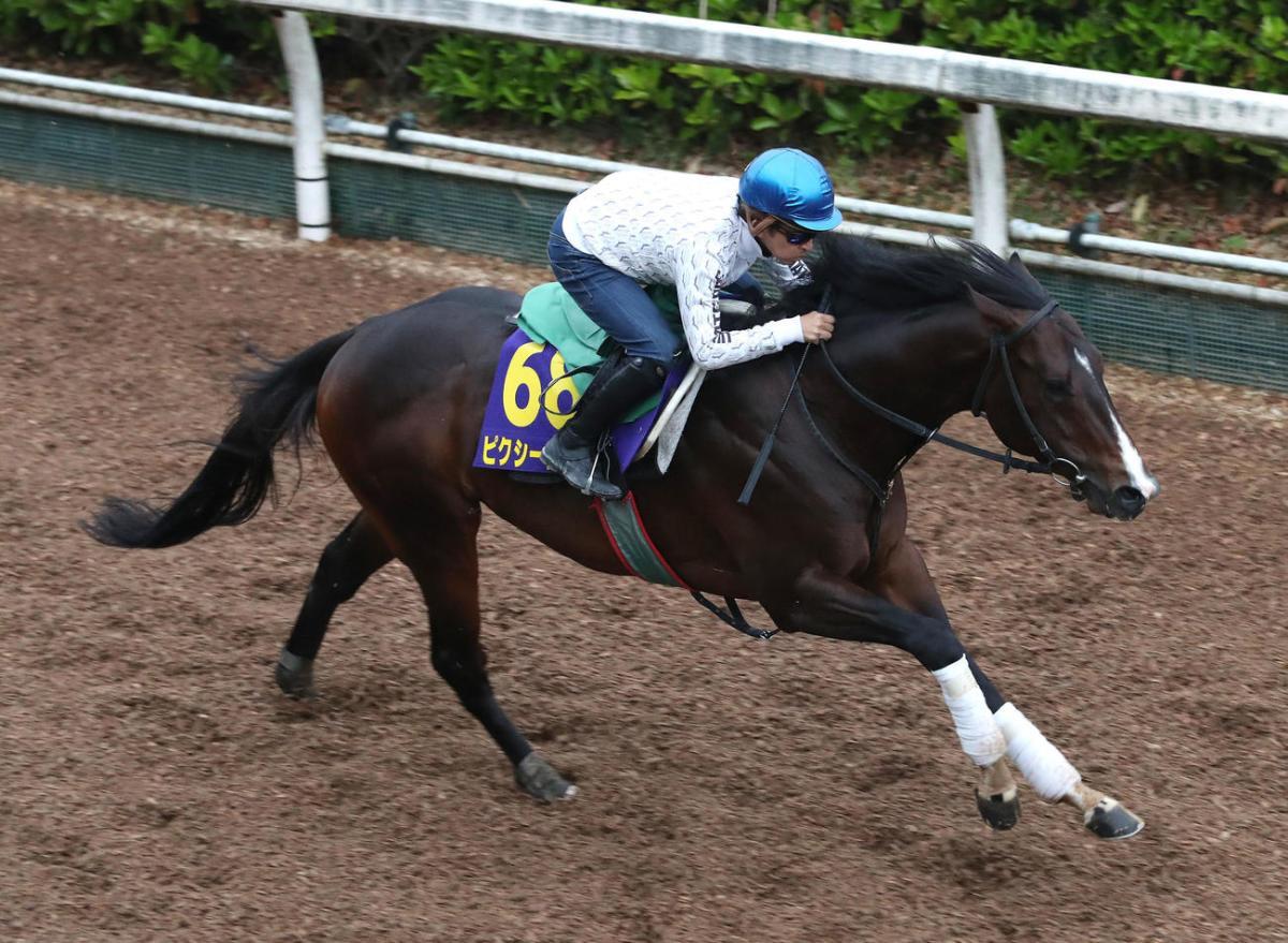 2021年5月9日NHK一哩賽賽馬日各場預測