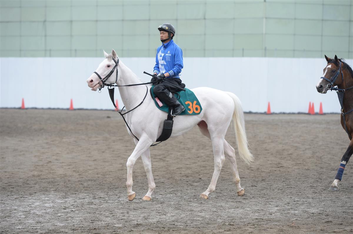每日賽馬晚報(2021年6月8日),活拜馬場週五復賽,再有日本白毛馬初上賽場