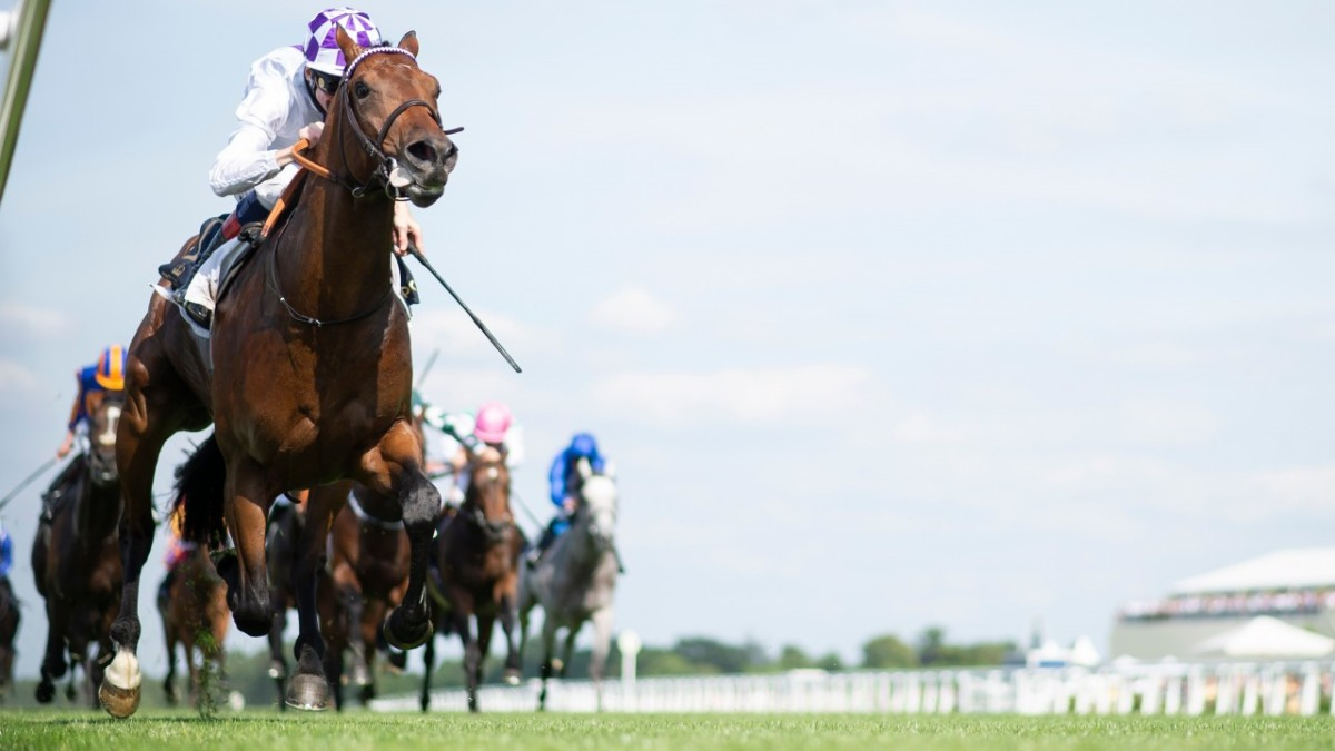 聖詹姆士皇宮錦標,詩情綻放成最強鐵馬