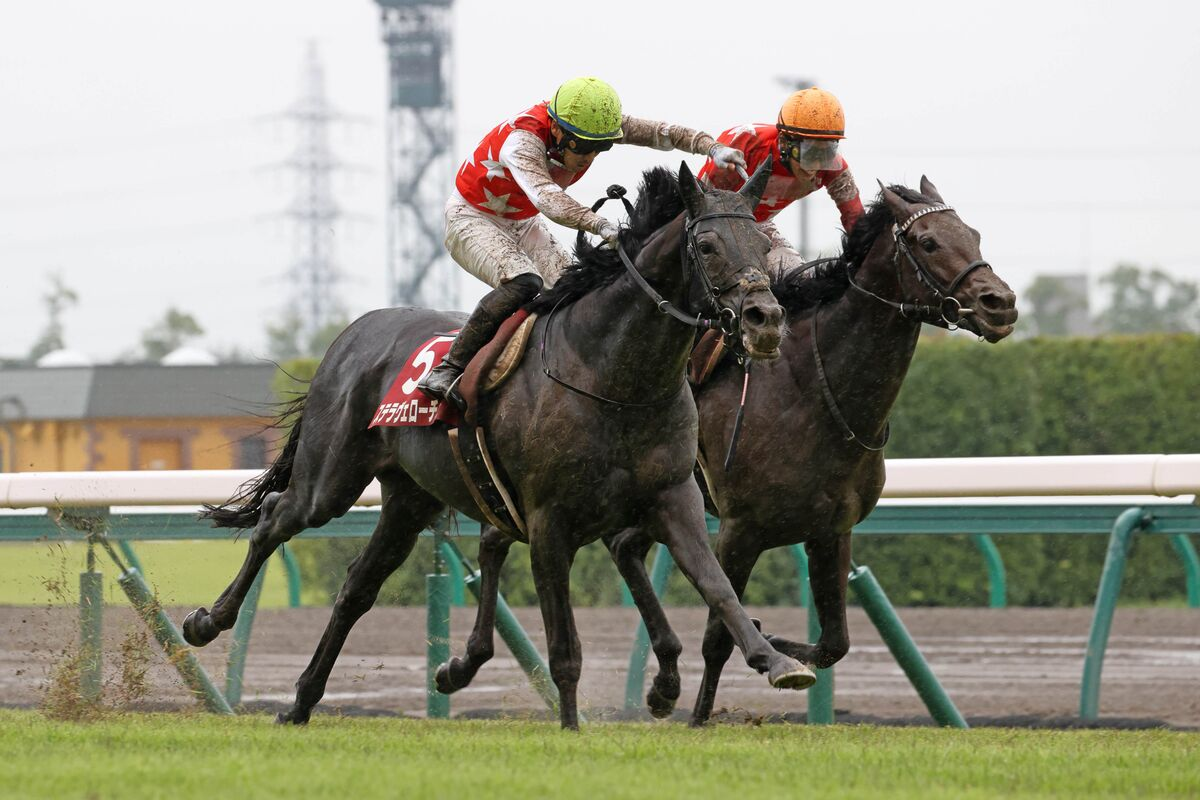 神戶新聞盃,星光速地爛佔優勢